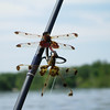 Paul Nepote