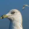 Wildlife